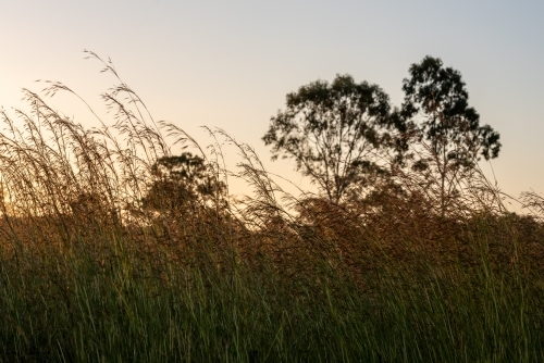 Sunset View with tall grass
