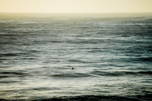 Surfer patiently awaiting a wave
