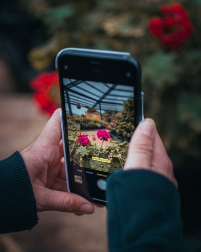 Taking Photos of Flowers on a Phone
