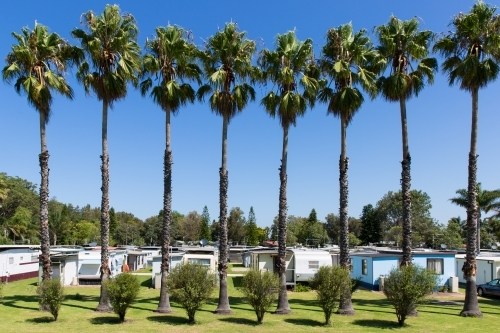 Tall palm trees and caravan park down the south coast of NSW