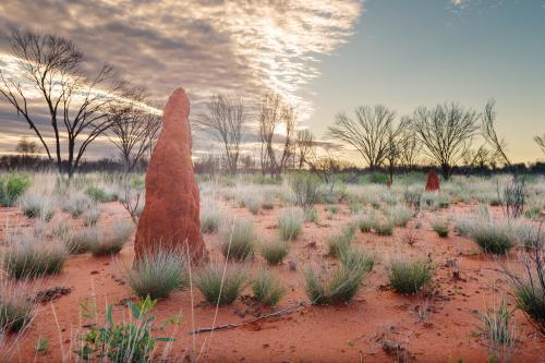 Termite mound in outback landscape Northern Territory