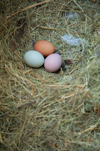 Three eggs in a nest, brown, pink and blue