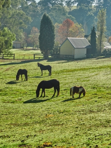 Three Horses and a Shetland Pony in a Paddock in Nutfield