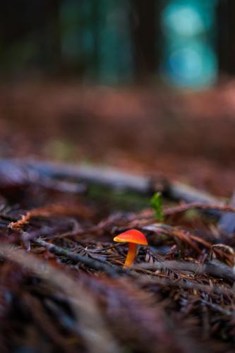 Tiny Red Toadstool in forest