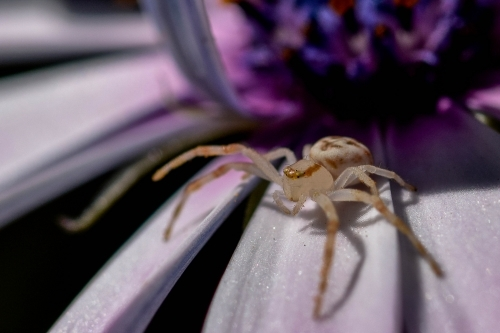 Tiny spider sitting on a purple flower