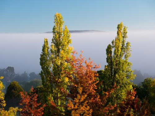 Tops of trees with autumn leaves against misty background