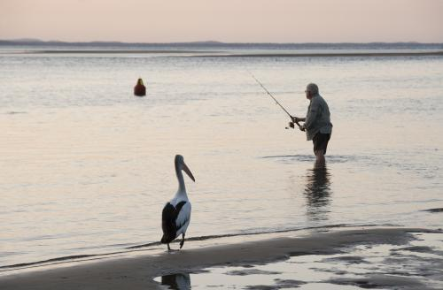 Man fishing with pelican in foreground