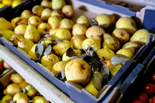 Trays of pears in organic farm shop