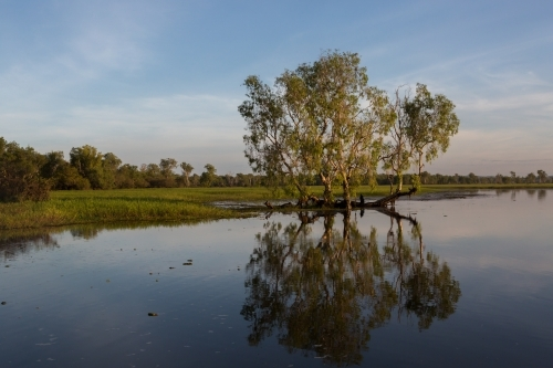 tree and reflection in the river at Kakadu