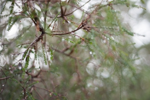Tree branch and leaves with water droplets