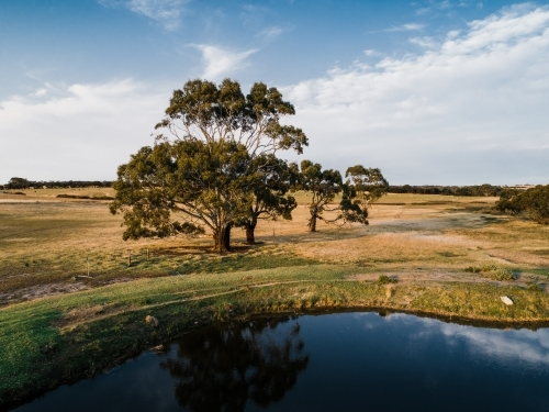 Trees and dam in farm land
