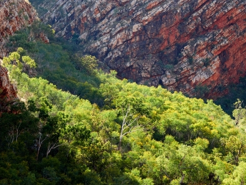 Trees in Front of a Red Cliff Face on Talbot Bay