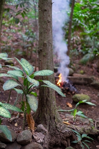tropical plants in a forest as a campfire burns nearby