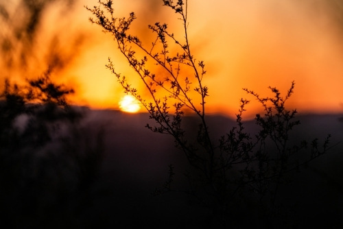 Twigs silhouetted against sunset in mountains