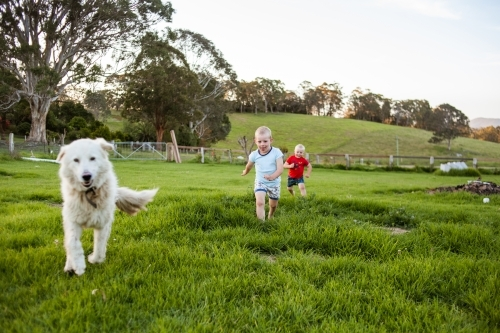 Two boys run through vibrant green field with pet Maremma Sheepdog.