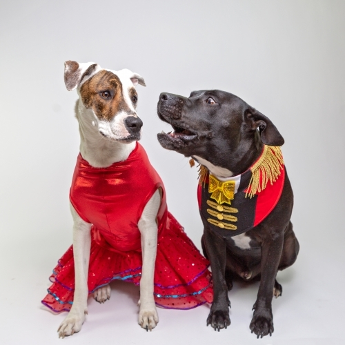 two dogs in fancy dress costumes