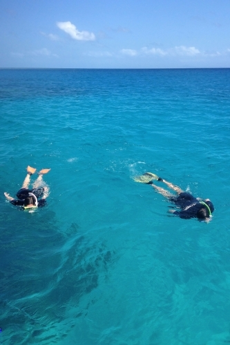 two people swimming with snorkels in the ocean