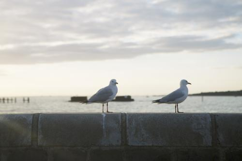 Two seagulls standing on wall at the beach