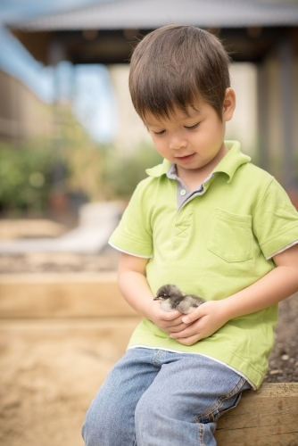 Cute boy holding his pet chicken in the backyard of his suburban home