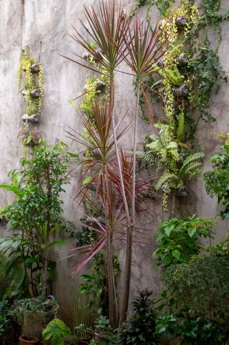 vertical garden with tropical plants