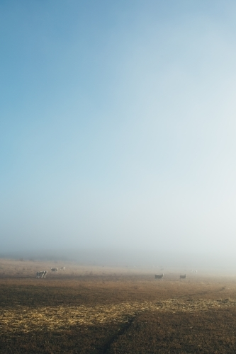 Vertical shot of sheep standing in the distance in a paddock