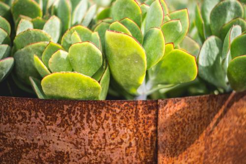 Vibrant green succulent plant in a container
