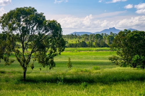 View of Queensland countryside with vibrant green grass and trees
