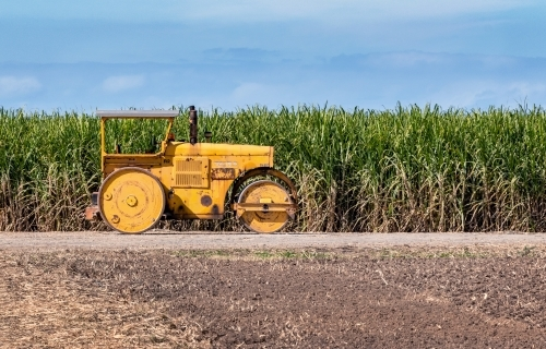 Vintage yellow tractor on sugar cane farm on a sunny day