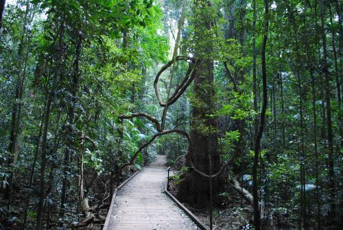 Walkway through the rainforest at the Mary Cairncross Scenic Reserve