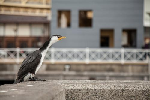 Wet cormorant bird sitting on wharf in Newcastle in the rain