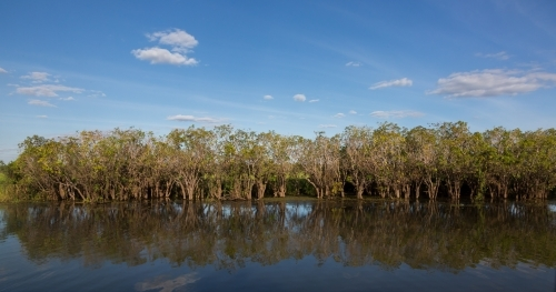 wetland vegetation along the waterway in kakadu