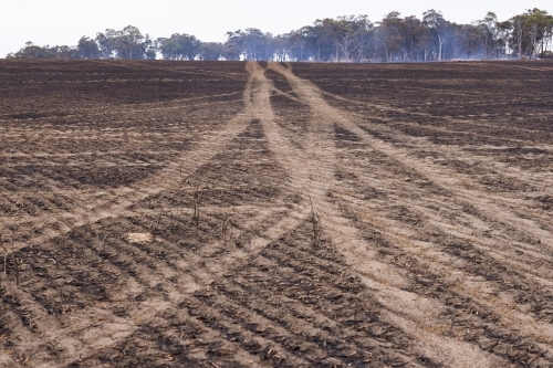 wheel tracks where fire trucks have driven over burnt ground on a farm