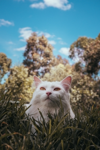 White Cat Laying in Grass on a Sunny Day