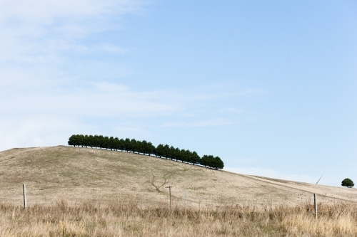 Treeline on a hill with wind turbine blade protruding