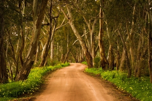 Winding dirt road in Clare Valley bordered by trees and grass