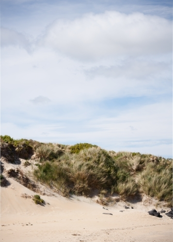 windswept sand dunes and coastal vegetation