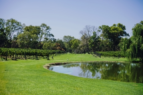 Large artificial lake on a winery near the vineyard