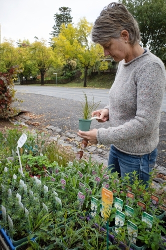 Woman selecting plants from a small local nursery