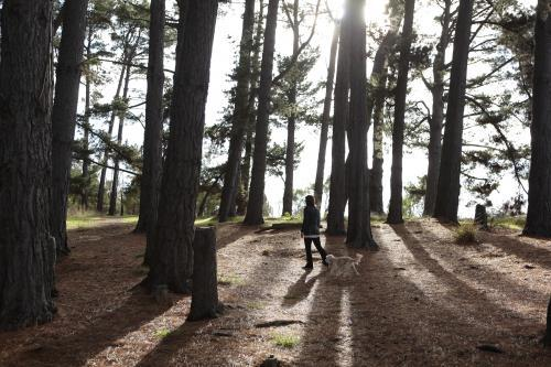 Woman walking her dog through a forest of trees with long shadows