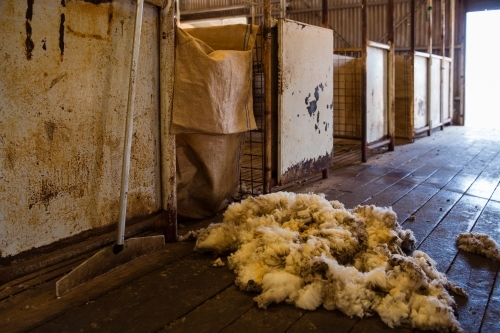 Wool remnants inside the shearing shed