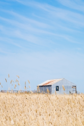 Country shed through the summer grasses
