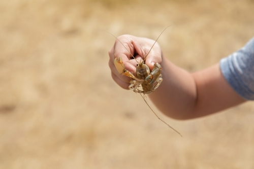 Yabby In A Boy's Hand On Neutral Background