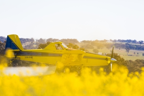 yellow plane used for crop dusting applying fungicide to a canola crop