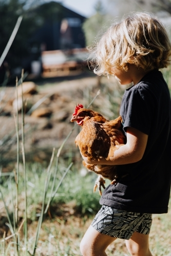 Young boy holding chicken
