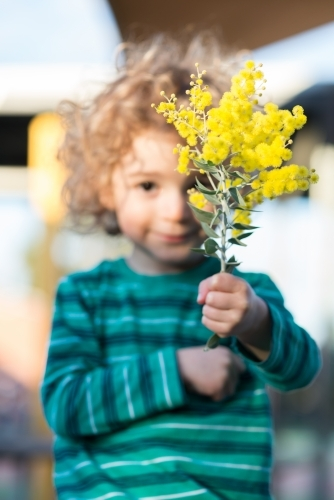Young boy holding up a branch of wattle