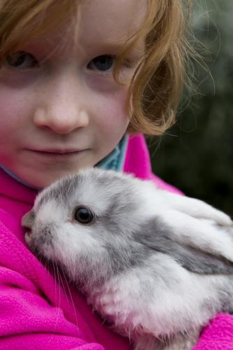 Young girl cuddling a grey and white mini lop rabbit