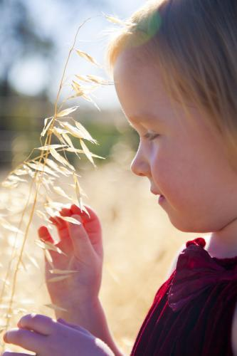 Young girl holding a stalk of grass and seeds in summer light