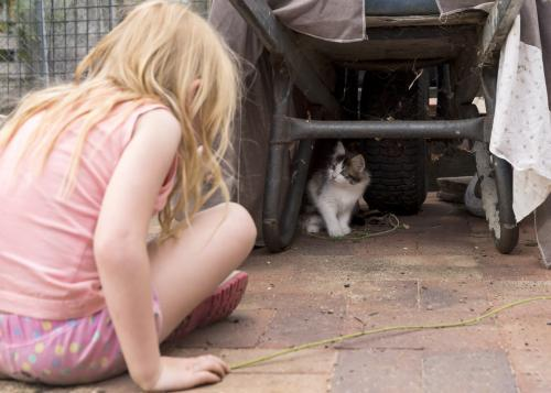 Young girl looking at scruffy kitten hiding under wheelbarrow
