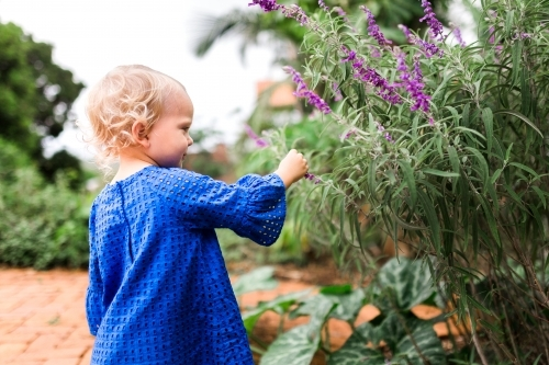 Young girl picking lavender flowers