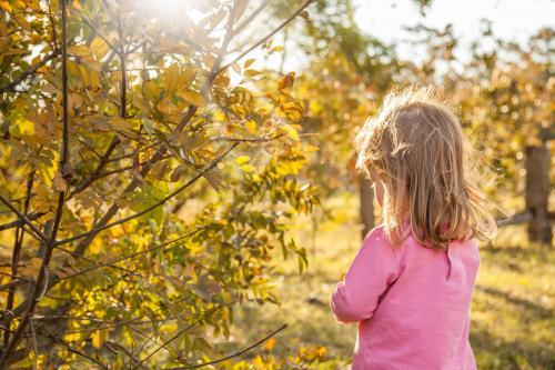 Young girl pulling leaves off a deciduous tree in the golden afternoon light
